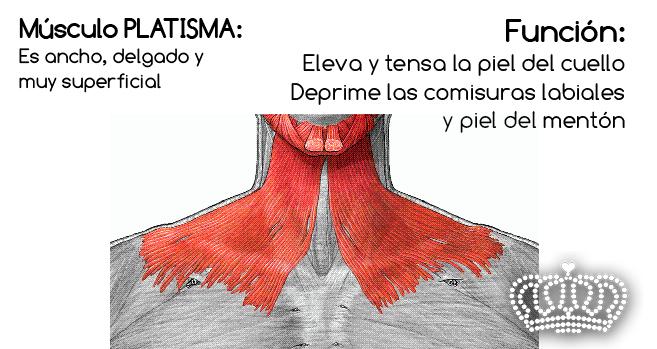 Corregir el descolgamiento intenso del cuello. HIFULIFT.